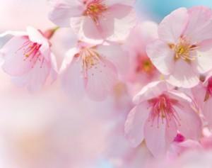 Blossoming - Essence Bracelets Message